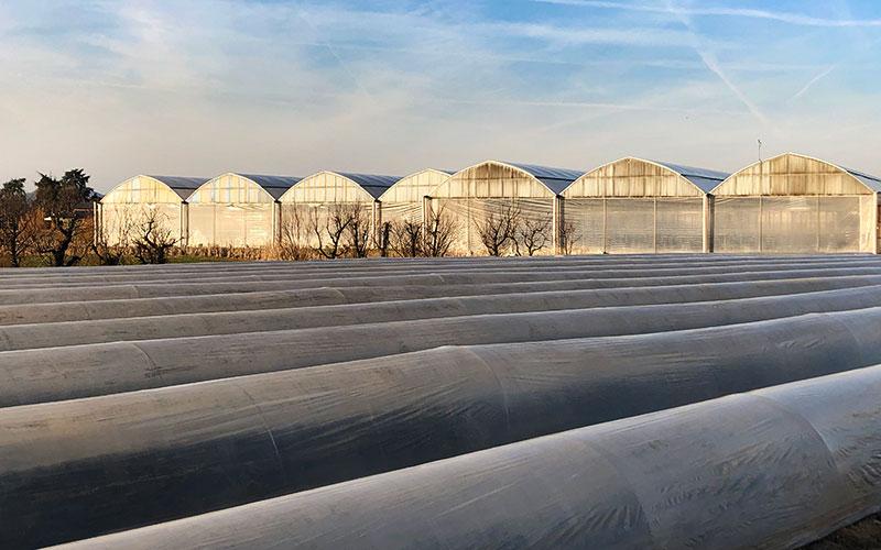 Greenhouses for the cultivation of asparagus - Farm Baraldo Luigino - Padua Pernumia